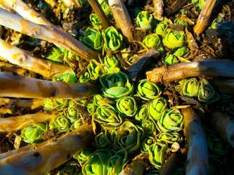 LL green plants 2014
