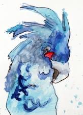 CH Bird 2013_5347