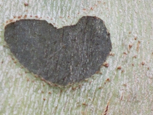 AS heart in tree-2 2014 copy2