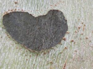 AS heart in tree-2 2014 copy2
